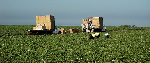 Salinas Valley Harvest