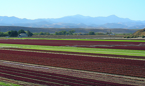 Salinas Fields