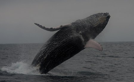 humpback-whale-beaching