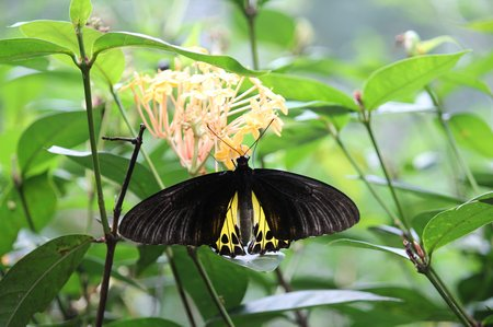kuala-lumpur-butterfly-park