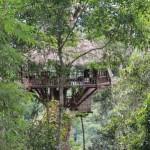 gibbon-experience-treehouse.jpg