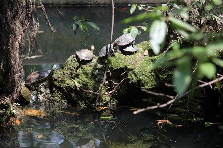 chengdu-wenshu-temple-turtles