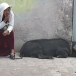 ecudaor-tourism-woman-with-hog.jpg