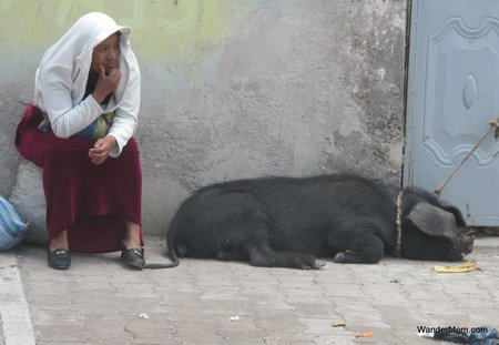Ecudaor-Tourism-Woman-With-Hog