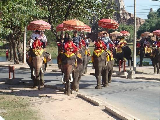 Thailand-Elephants
