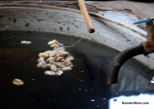 silk-making-cocoons